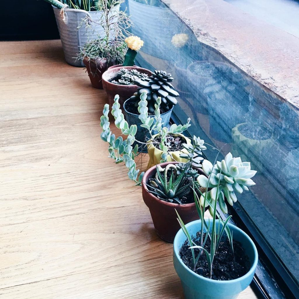 Cutest row of succulents at the cutest lil nail shophellip