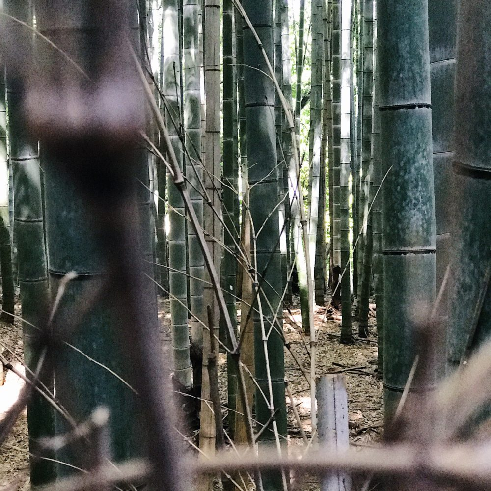 Peeking through the bamboo in Arashiyama (嵐山)